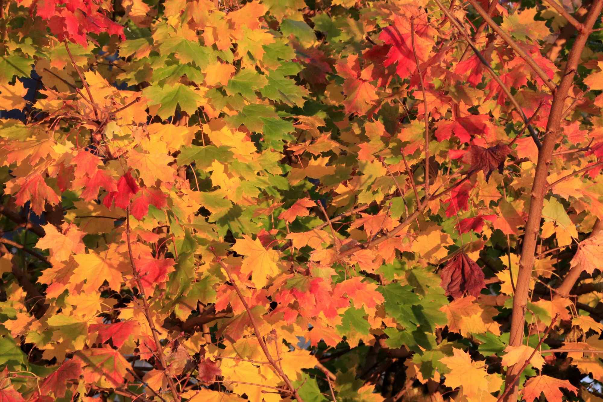Couleurs d'automne à Suscinio © L. Kersuzan-Morbihan Tourisme