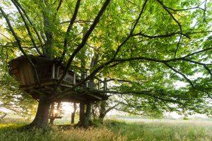 Cabane dans les arbres DIHAN, Ploemel