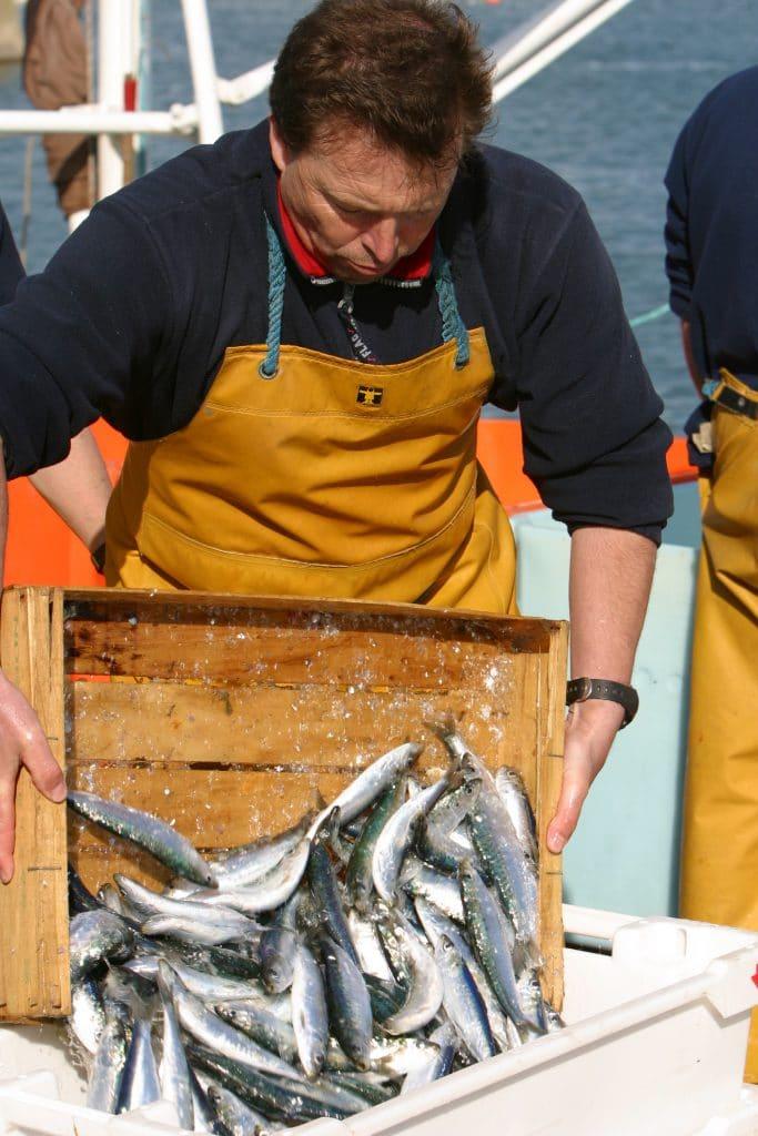 Retour de pêche à Quiberon