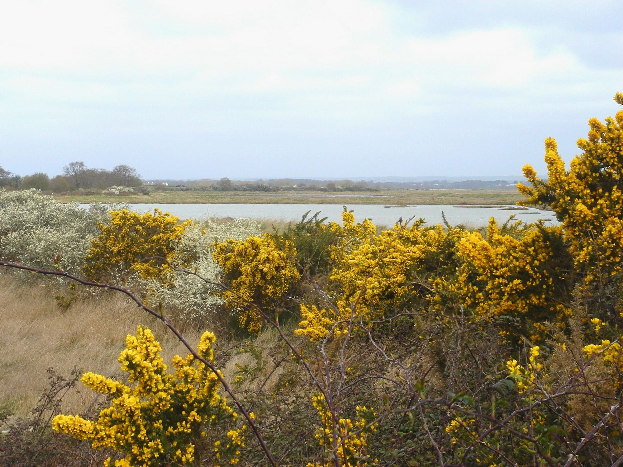 Les marais de Séné, espace protégé © Morbihan Tourisme