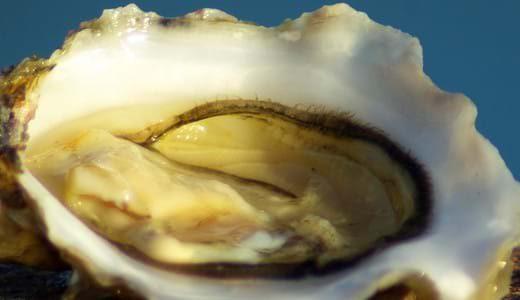 Recette bretonne fruits de mer- le tartare d'huîtres dans son bouillon à l'échalote