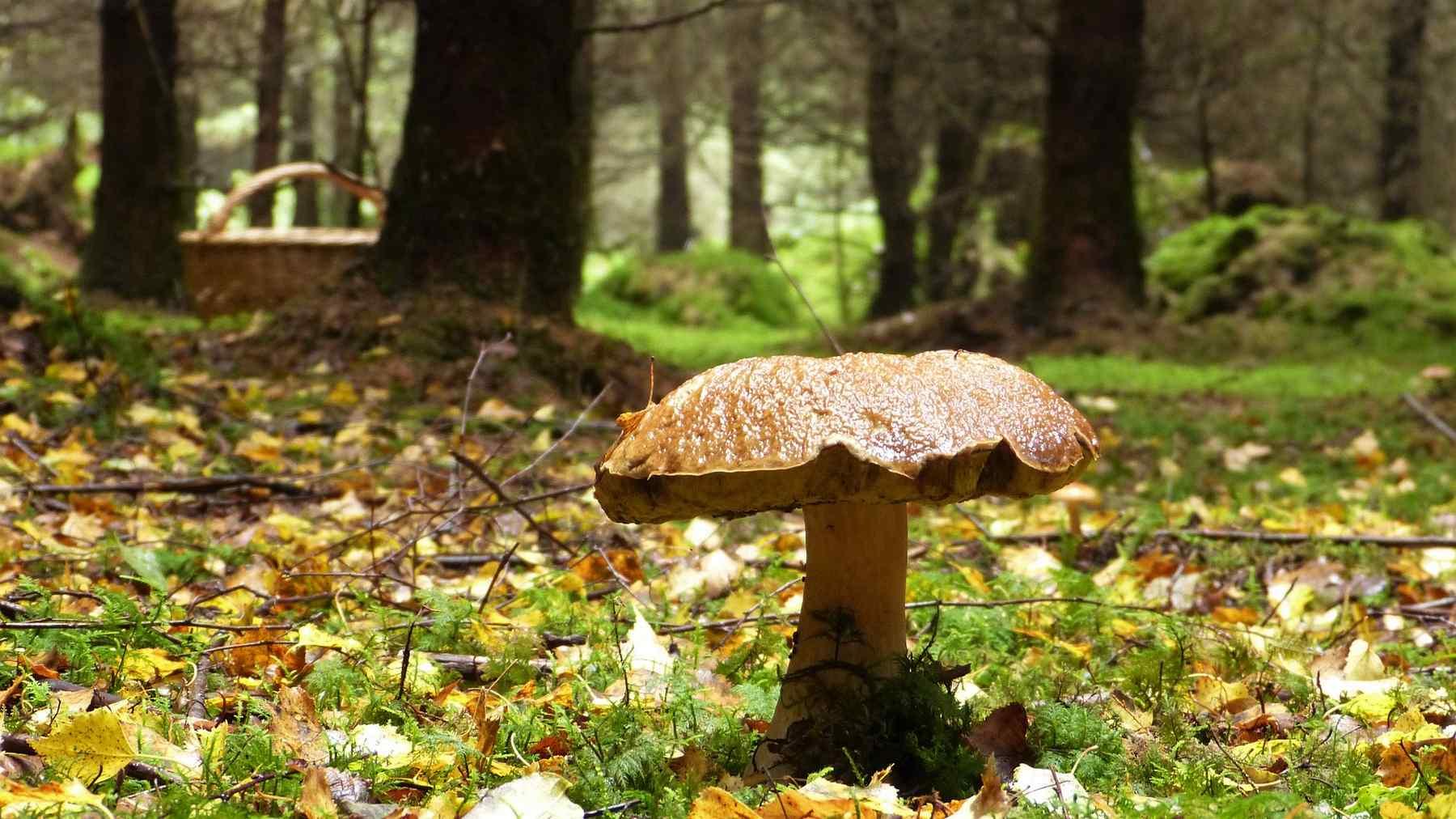 champignon © Capri23 -Pixabay 3686902_1920