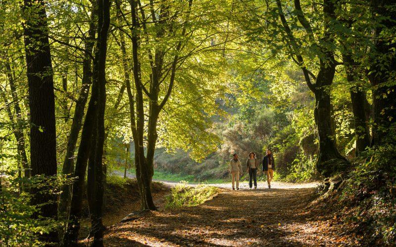Balade nature en forêt de Brocéliande
